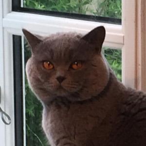 Kattens hovedform
