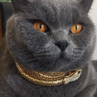 richcat